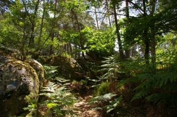 Cette forêt est à pleurer tant elle est belle...